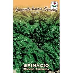 SPINACIO RICCIO GIGANTE AMERICA GR 500 (SEMI)