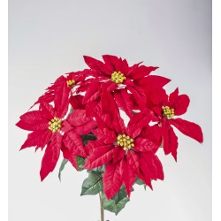 BUSH POINSETTIA X 5 RED