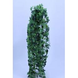 IVY BUSH ENGLISH CM 118 - GREEN