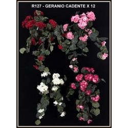 GERANIO CADENTE X 12