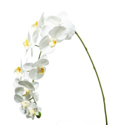 ORCHIDEA NATURAL TOUCH WHITE X11