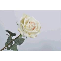 ROSA SINGOLA CM52 BEIGE
