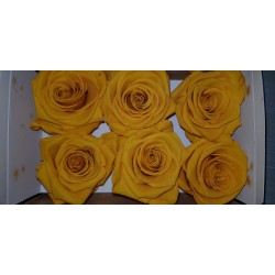 ROSE STABILIZZATE X6 WARM YELLOW