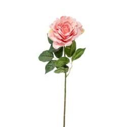 ROSA AMBRA PINK