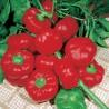Peperone Topeto Rosso Gr.6 (semi)