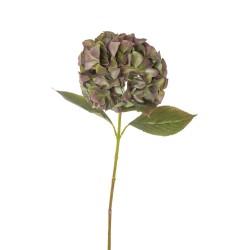 ORTENSIA ROMANTICA CM.67 GREEN