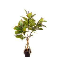 Pianta Ficus Elastica X 35 Cm.110