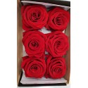 Rose Stabilizzate X6